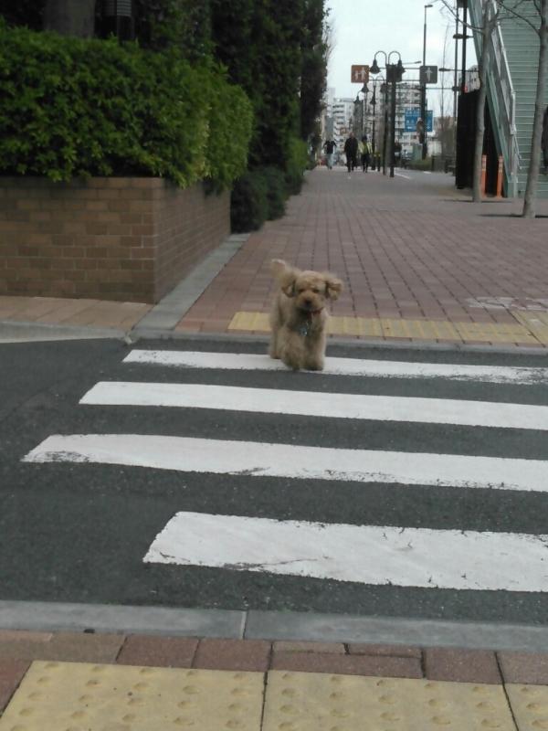 散歩の時の花_c0162773_23564989.jpg