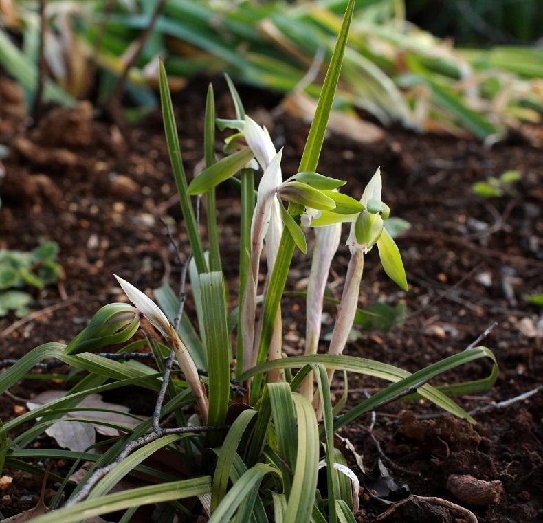 寄贈された草花で出来上がっていく花壇_a0107574_17324332.jpg