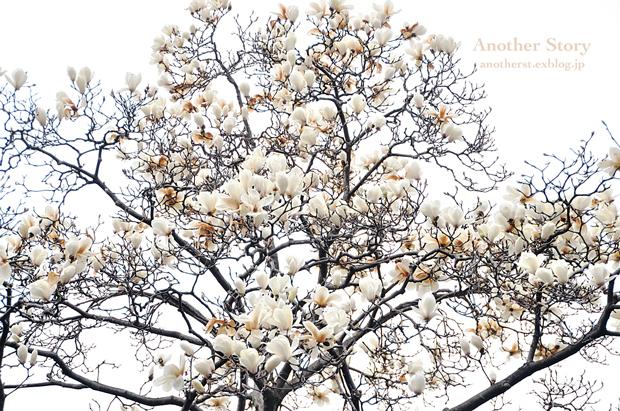 tree 〜寸景〜_a0238574_12264301.jpg