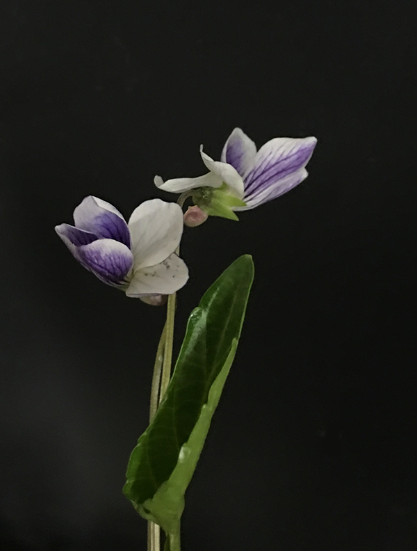 小さな春_b0134123_2128236.jpg