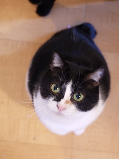 お誕生日猫 らぃら6歳編。_a0143140_1853385.jpg