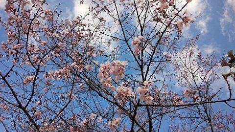 桜_d0147944_10264192.jpeg