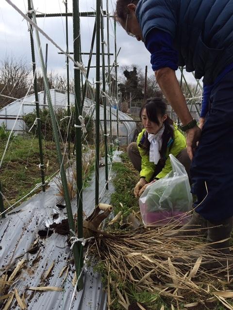 イタリアの初挑戦の 新種エンドウ豆 発芽しましたが 残念ながら育ちませんでした 国産のきぬさやの苗定植します_c0222448_14541718.jpg