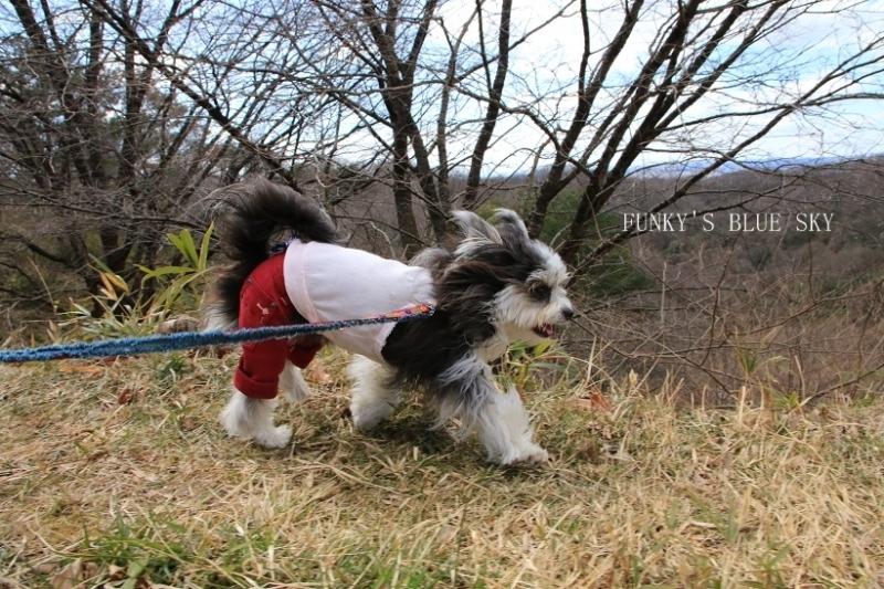 早春の山散歩♪_c0145250_15444439.jpg