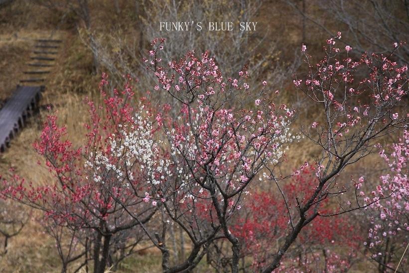 早春の山散歩♪_c0145250_15445313.jpg