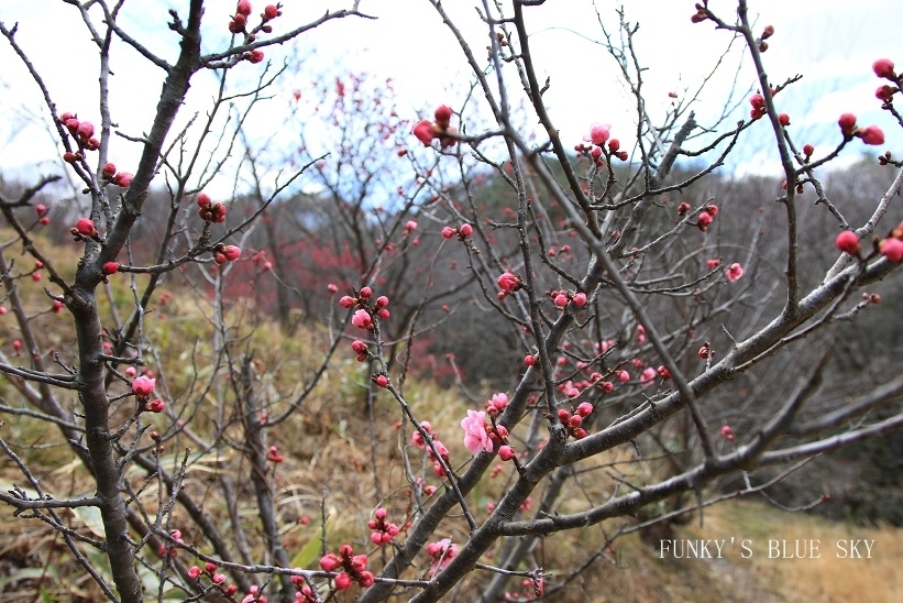 早春の山散歩♪_c0145250_15445787.jpg