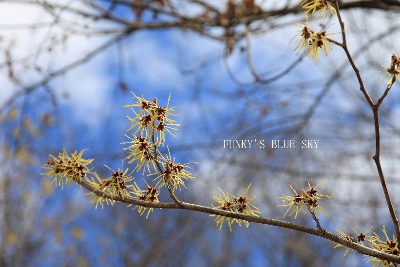 早春の山散歩♪_c0145250_15450846.jpg