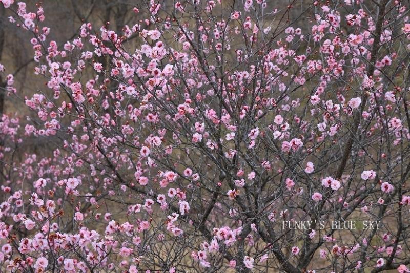 早春の山散歩♪_c0145250_15451266.jpg