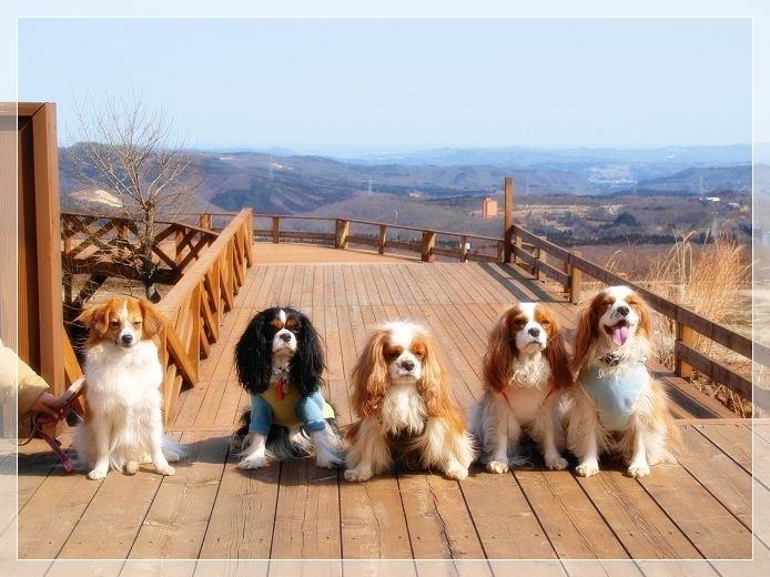 早春の山散歩♪_c0145250_16583933.jpg