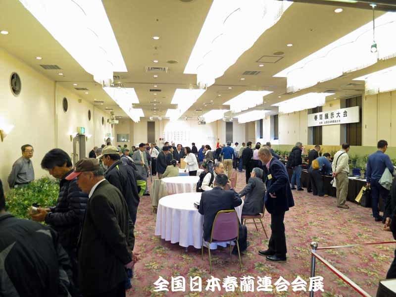 中国蘭・新花兜ha                       No.1672_d0103457_11320009.jpg