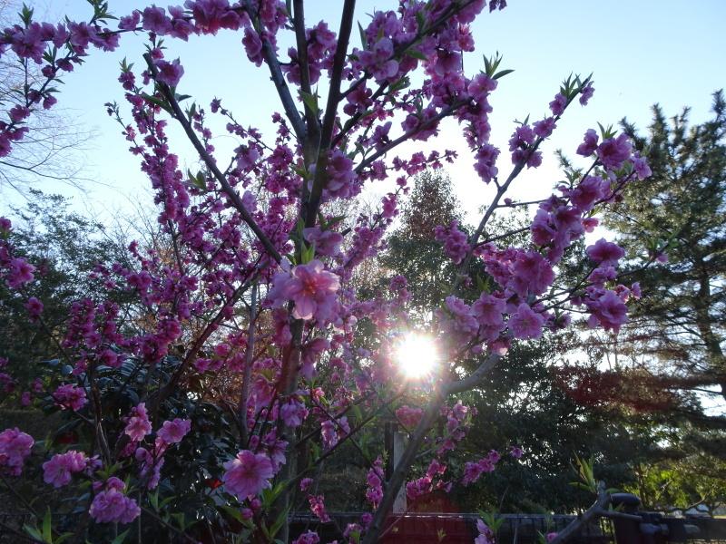 『阪南市:夕日鑑賞会』うみべの森で里山体験_c0108460_23491748.jpg