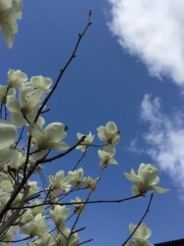 春はいいなぁ。_a0220570_21211591.jpg
