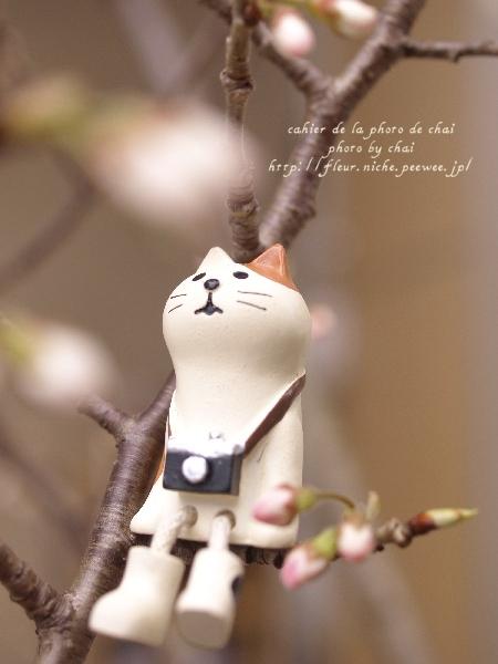 さくらんぼうの樹 #ねこ助手_b0320893_01033853.jpg