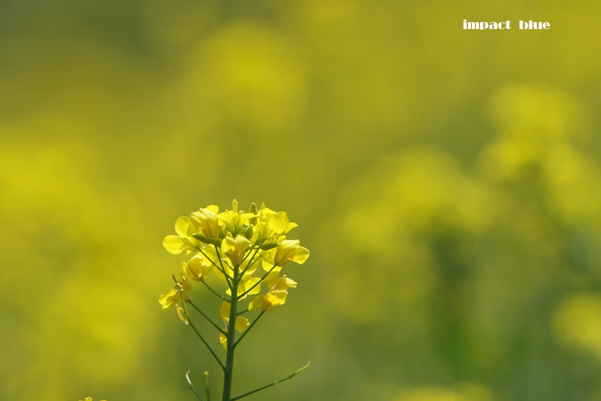 春を堪能しましたよ~(#^.^#)_a0355908_20445968.jpg