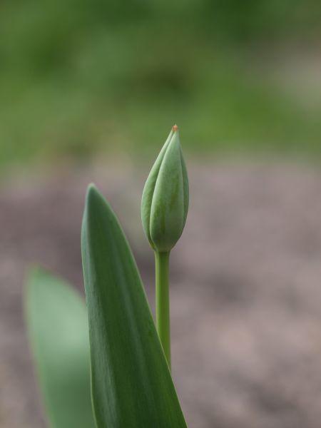 春の花_c0164709_21323341.jpg