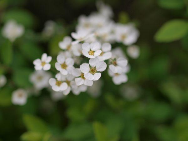 春の花_c0164709_21333782.jpg
