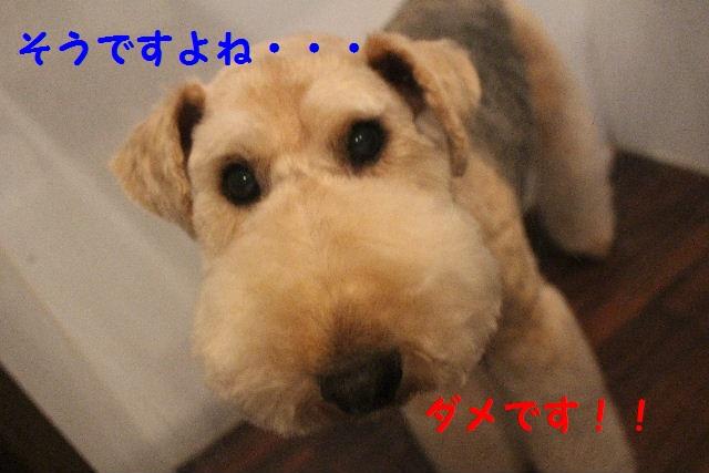b0130018_030361.jpg