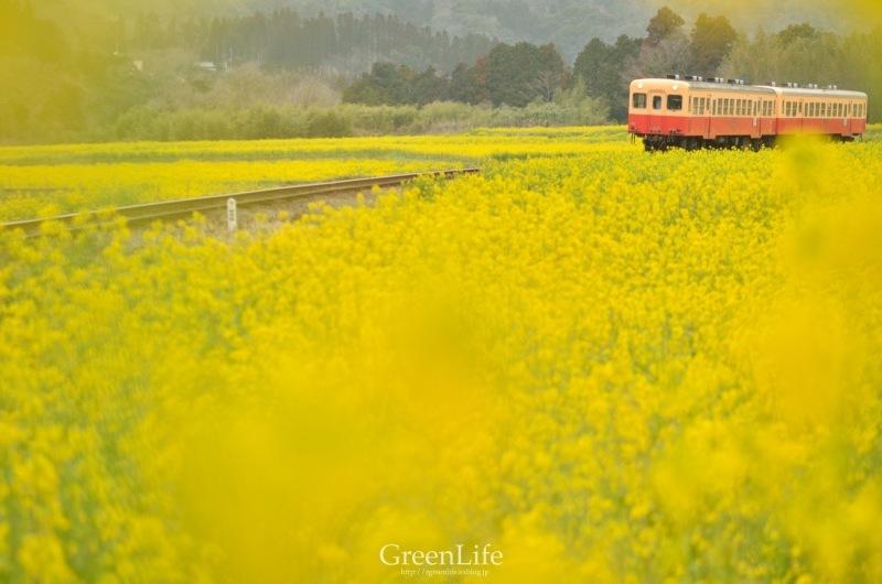 トコトコ電車に揺られて_f0321522_09495448.jpg
