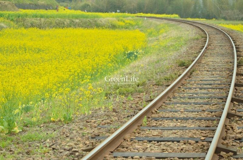 トコトコ電車に揺られて_f0321522_09534960.jpg