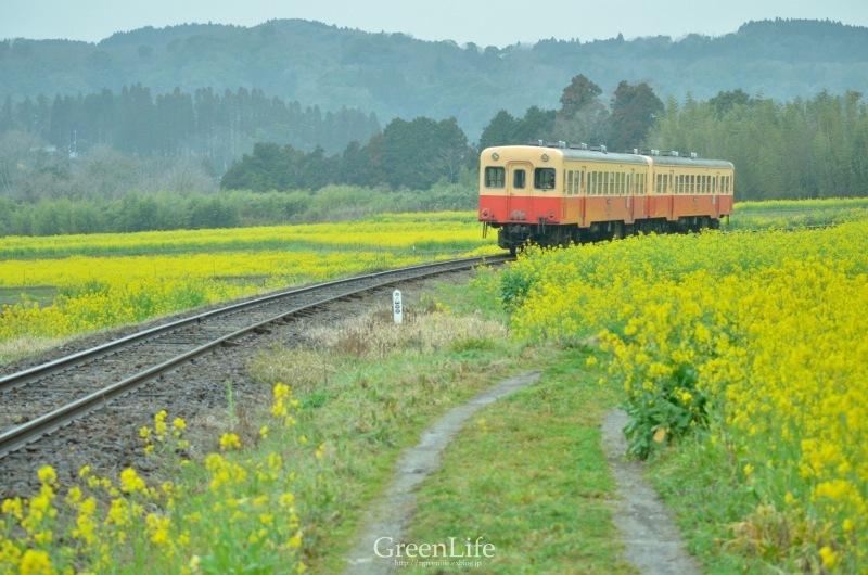 トコトコ電車に揺られて_f0321522_09550497.jpg
