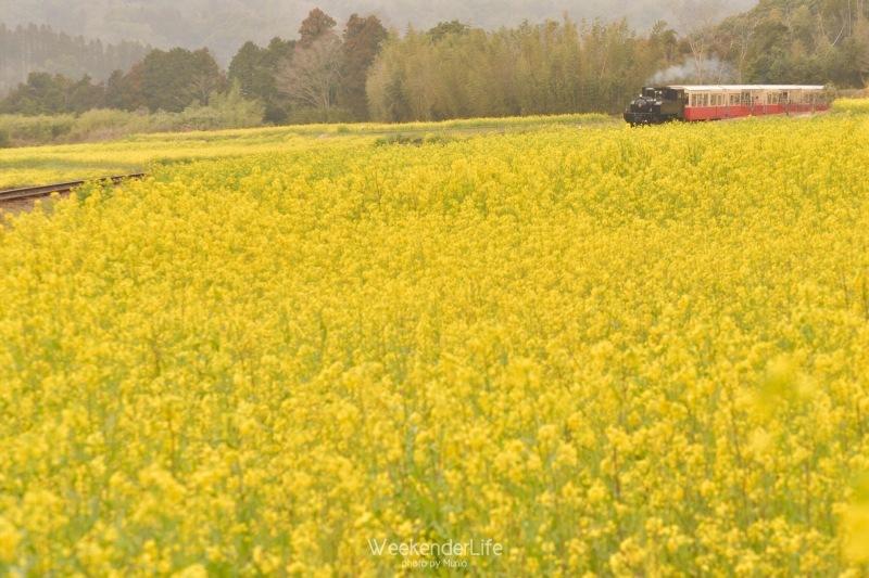 トコトコ電車に揺られて_f0321522_09571909.jpg