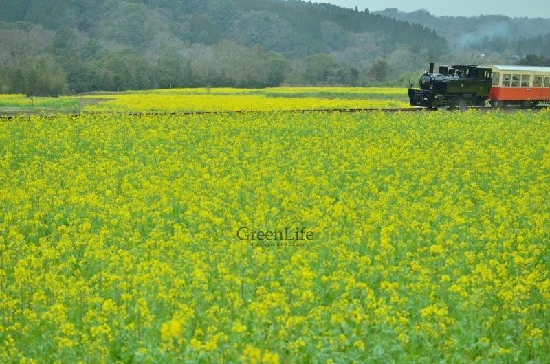 トコトコ電車に揺られて_f0321522_10022736.jpg