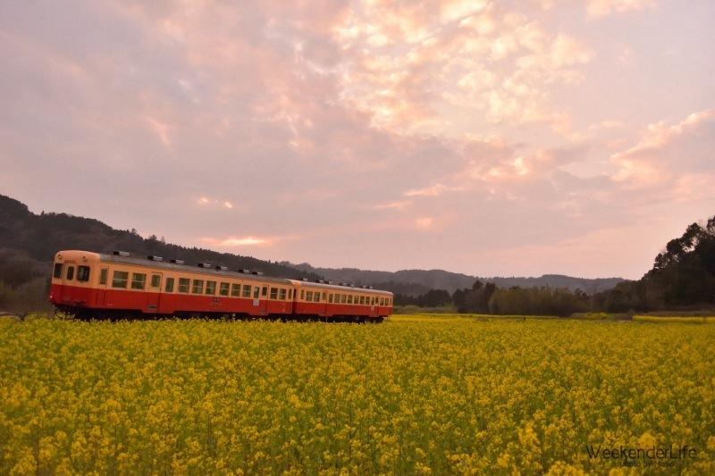 トコトコ電車に揺られて_f0321522_10150274.jpg