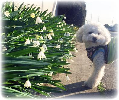 春の散歩_f0045132_10395883.jpg