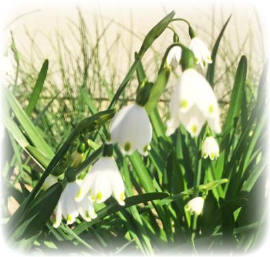 春の散歩_f0045132_1040985.jpg