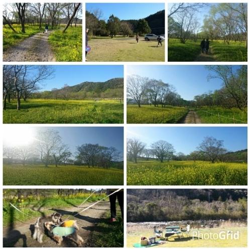 春の色は黄色_c0172049_23565509.jpg