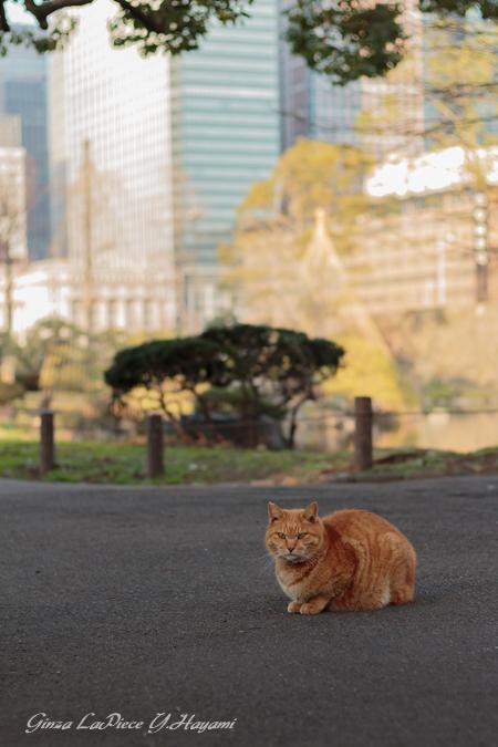 猫のいる風景 日比谷公園 ビルとチャッピー_b0133053_155639.jpg