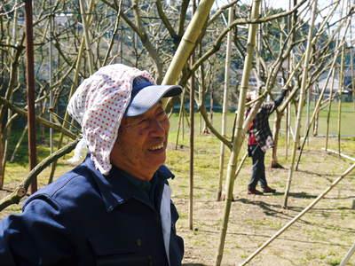 太秋柿 柿園全体をネットで覆い大切な『太秋柿』を育てる匠の惜しまぬ手間ひま_a0254656_1759529.jpg