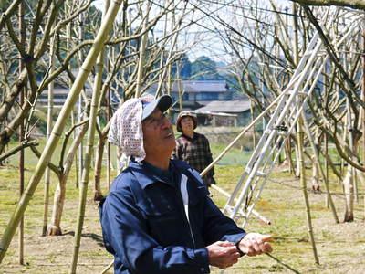 太秋柿 柿園全体をネットで覆い大切な『太秋柿』を育てる匠の惜しまぬ手間ひま_a0254656_18195074.jpg