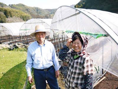 太秋柿 柿園全体をネットで覆い大切な『太秋柿』を育てる匠の惜しまぬ手間ひま_a0254656_18265670.jpg