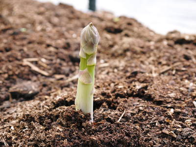 太秋柿 柿園全体をネットで覆い大切な『太秋柿』を育てる匠の惜しまぬ手間ひま_a0254656_18311272.jpg