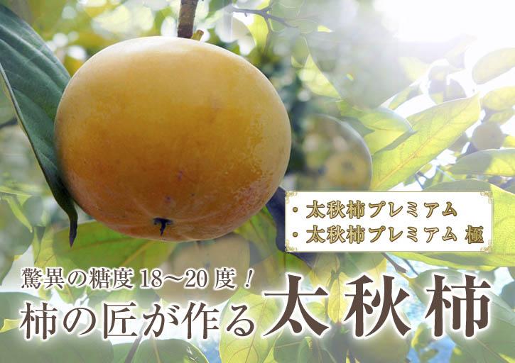 太秋柿 柿園全体をネットで覆い大切な『太秋柿』を育てる匠の惜しまぬ手間ひま_a0254656_18573573.jpg