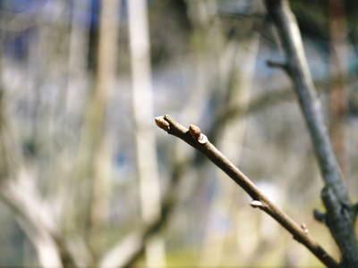 太秋柿 柿園全体をネットで覆い大切な『太秋柿』を育てる匠の惜しまぬ手間ひま_a0254656_1882028.jpg