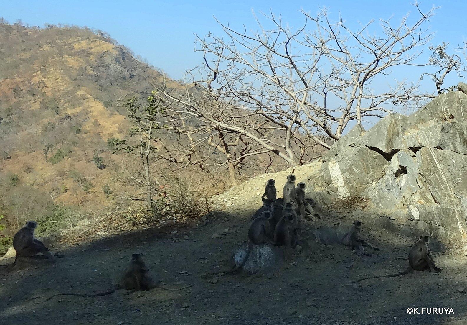 インド・ラジャスタンの旅 12 インド版「万里の長城」クンバルガル砦_a0092659_16525769.jpg