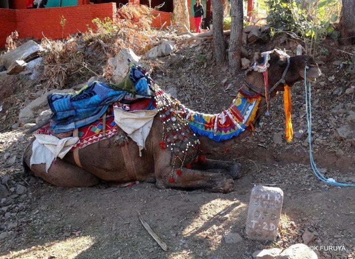 インド・ラジャスタンの旅 12 インド版「万里の長城」クンバルガル砦_a0092659_16565884.jpg