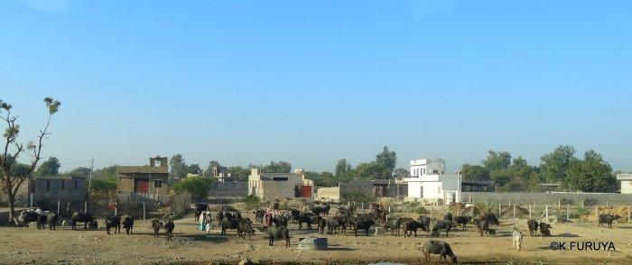 インド・ラジャスタンの旅 12 インド版「万里の長城」クンバルガル砦_a0092659_18342705.jpg