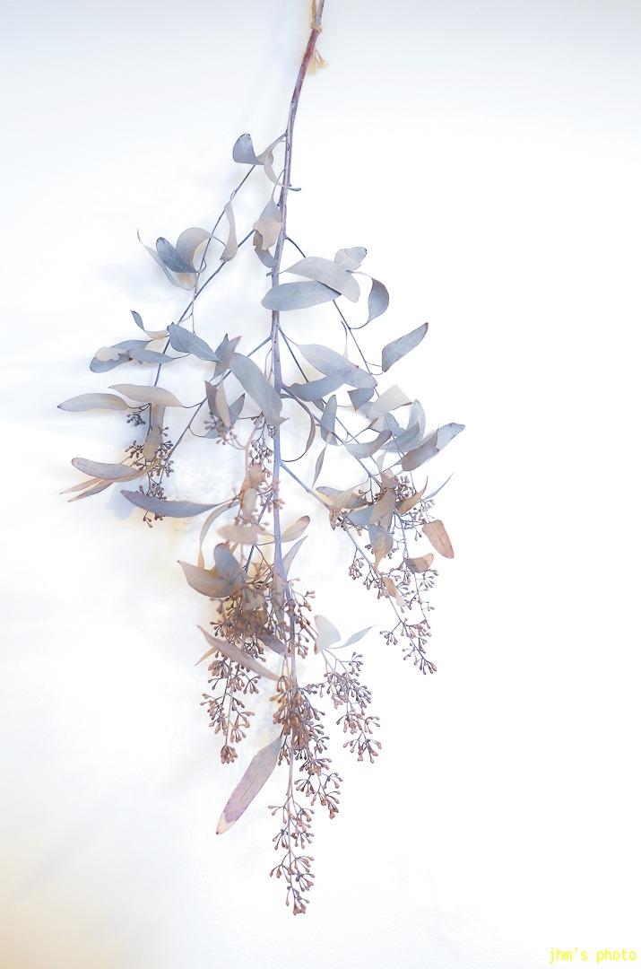 花と華_a0158797_2584023.jpg