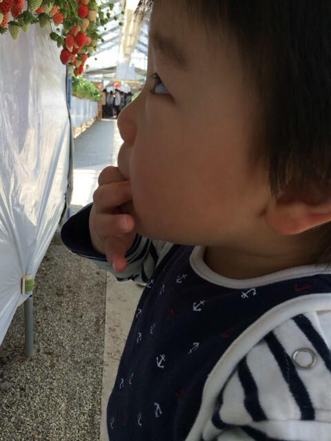 初めてのイチゴ狩り 1歳6ヶ月_e0181036_10151692.jpg