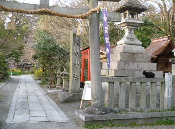 椿の羽織に栗山紅型帯のお客様・御所の桜と猫。_f0181251_18272948.jpg
