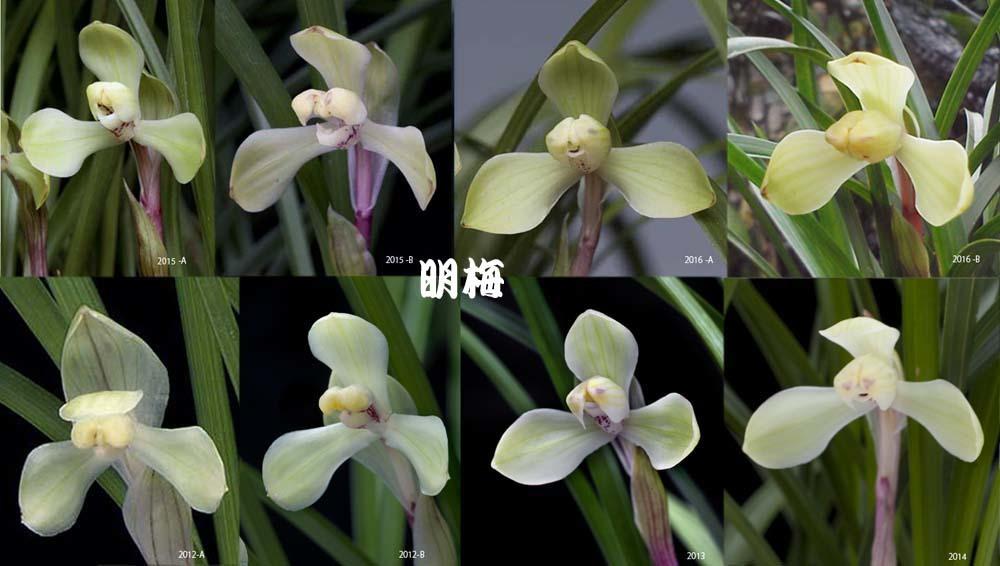 豆弁蘭「飛光」                       No.1673_d0103457_23241758.jpg
