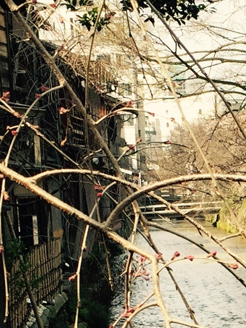 桜の季節❤︎_b0341759_15021817.jpg