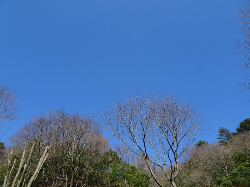 孝子の森は春である  by  (TATE-misaki)_c0108460_00435107.jpg