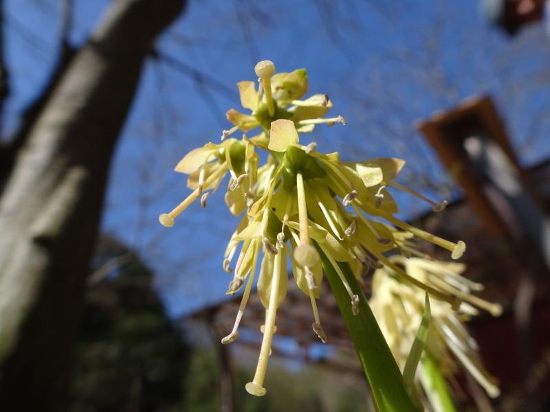 孝子の森は春である  by  (TATE-misaki)_c0108460_00435561.jpg