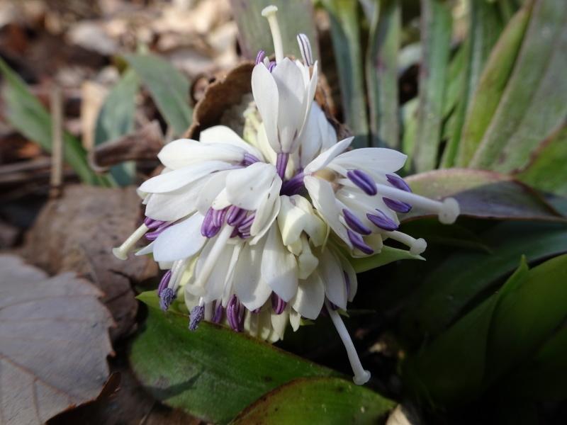 孝子の森は春である  by  (TATE-misaki)_c0108460_00435811.jpg