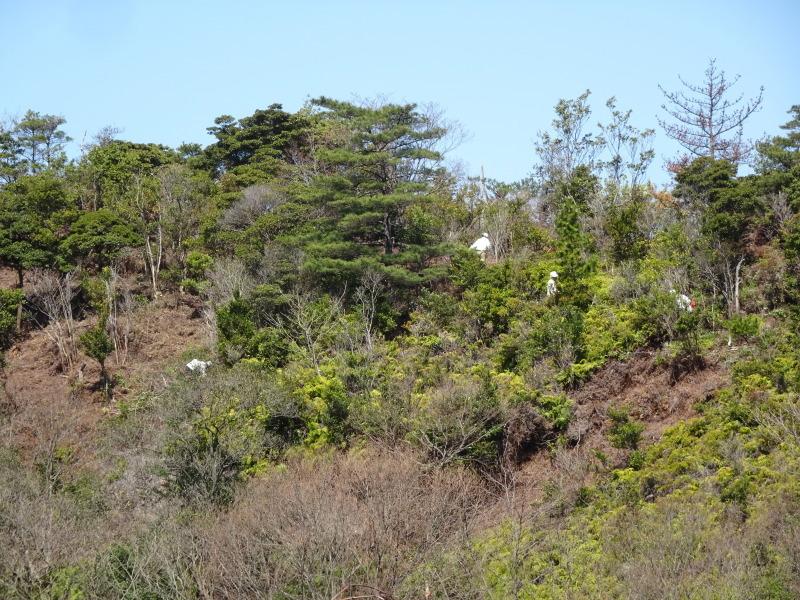 孝子の森は春である  by  (TATE-misaki)_c0108460_00464245.jpg