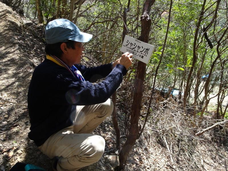 孝子の森は春である  by  (TATE-misaki)_c0108460_00484806.jpg